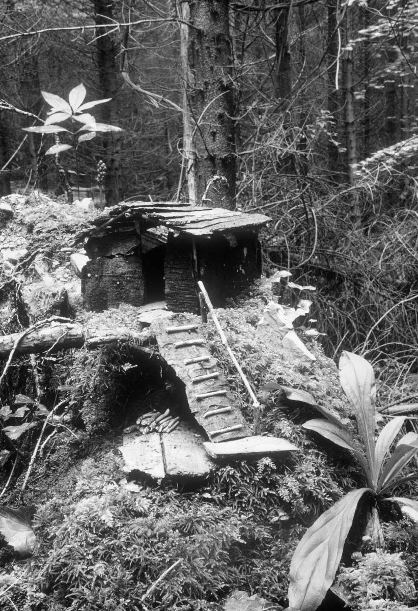 Sapinière des bois de Nicey-sur-Aire
